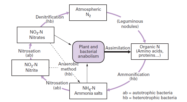 Nitrogen Cycle Process   Agri Learner