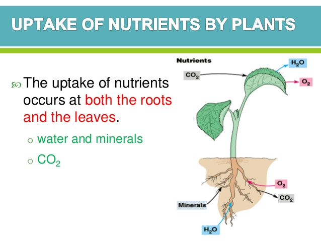Nutrition In Plant