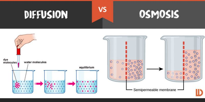 Diffusion And Osmosis In Detail   Agri Learner