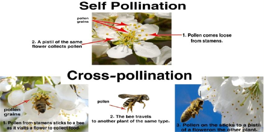 Modes of Pollination