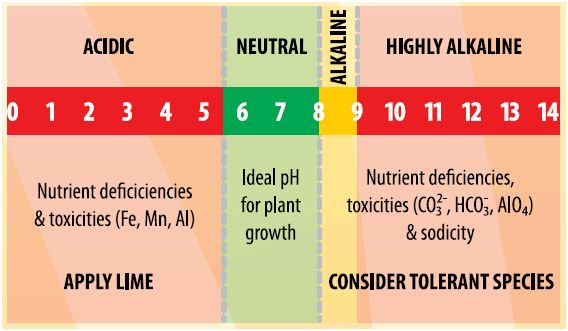 Soil PH and Its Measurement