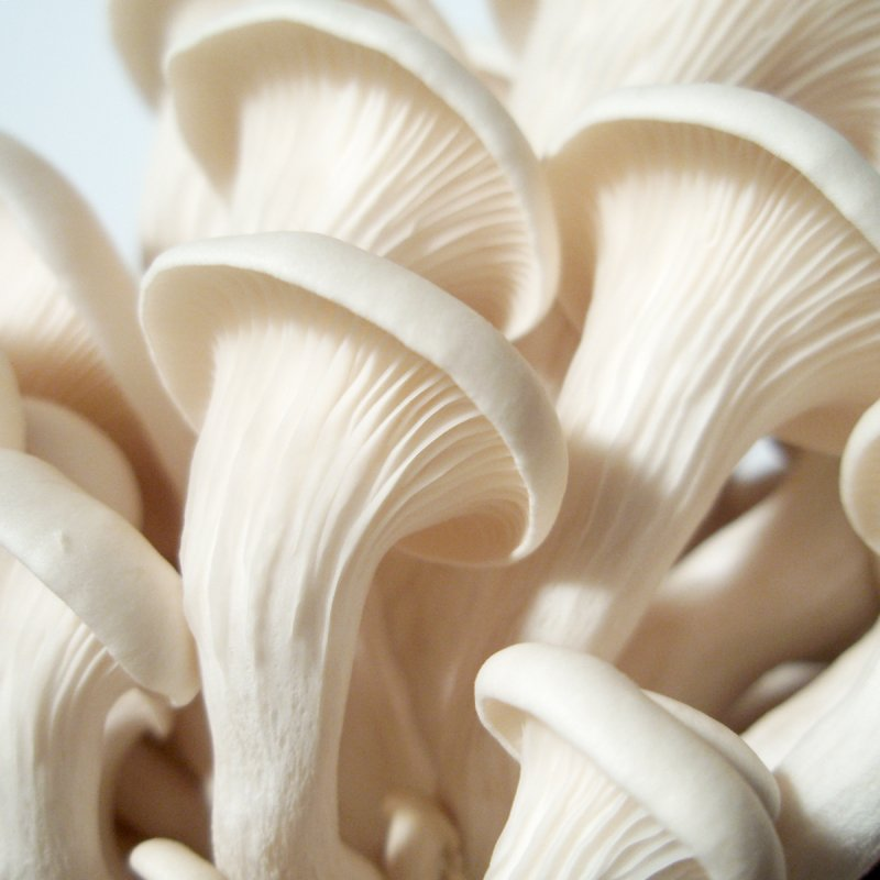 Nutritional and Medicinal Values of mushroom