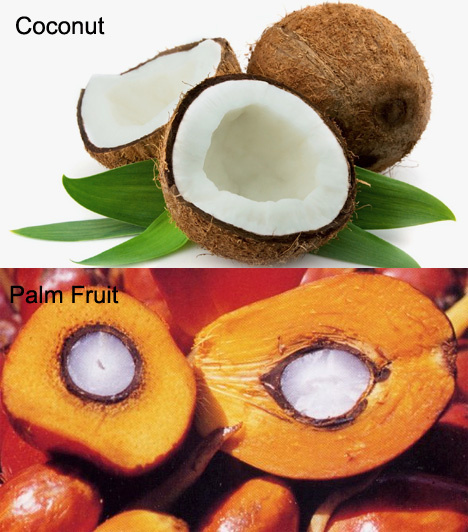 Diseases of Coconut and Oil palm