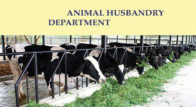 Essay on animal husbandry