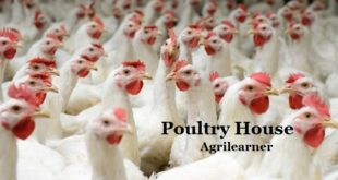 Poultry House