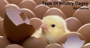 Types Of Poultry Cages