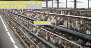 CLASSIFICATION OF POULTRY HOUSING SYSTEMS