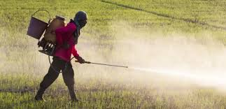Side effects Of Chemical Fertilizer
