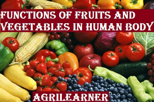 Functions of fruits and vegetables in human body