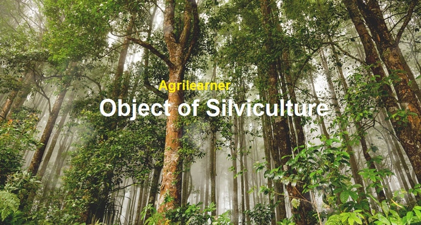Object of Silviculture