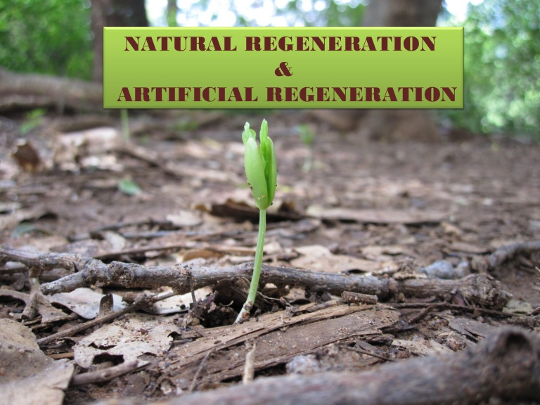 Regeneration of Forest