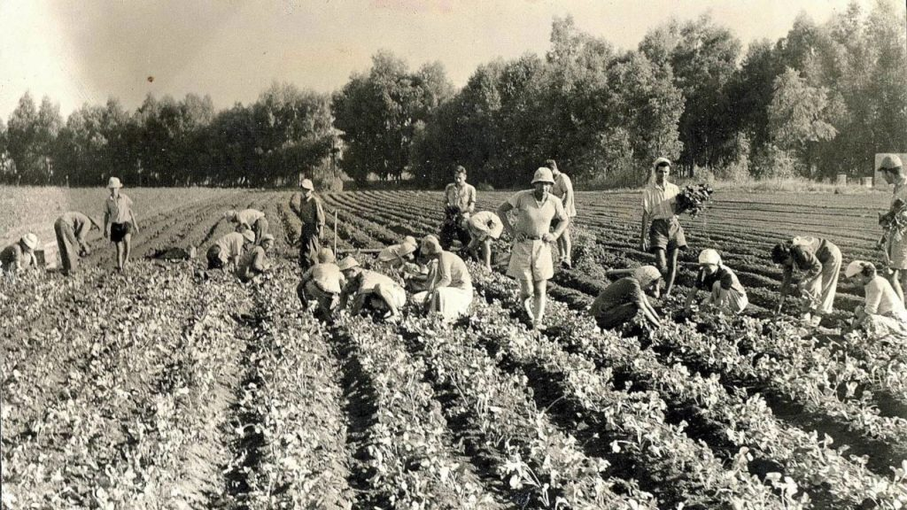 History of Agriculture