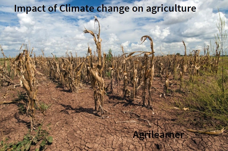 Climate change on agriculture