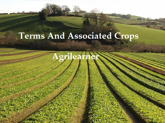 Terms And Associated Crops