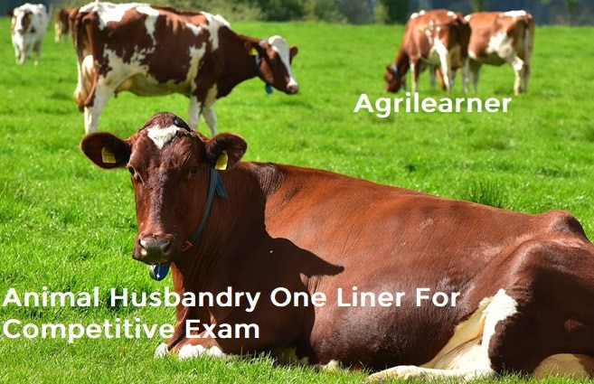 Animal Husbandry One Liner