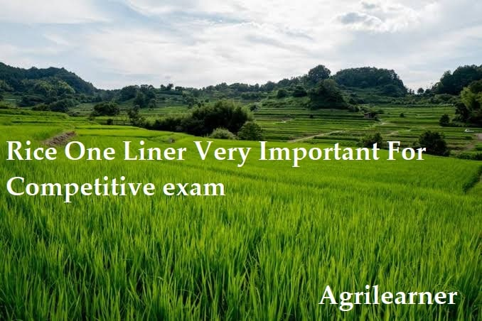Rice One Liner