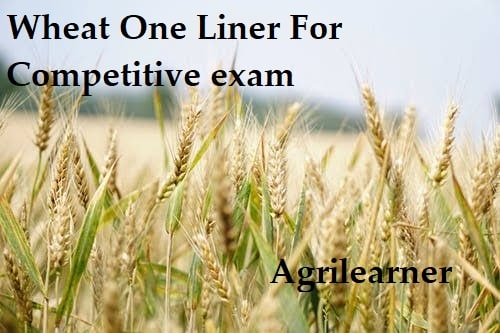 Wheat One Liner