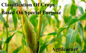 Classification Of Crops