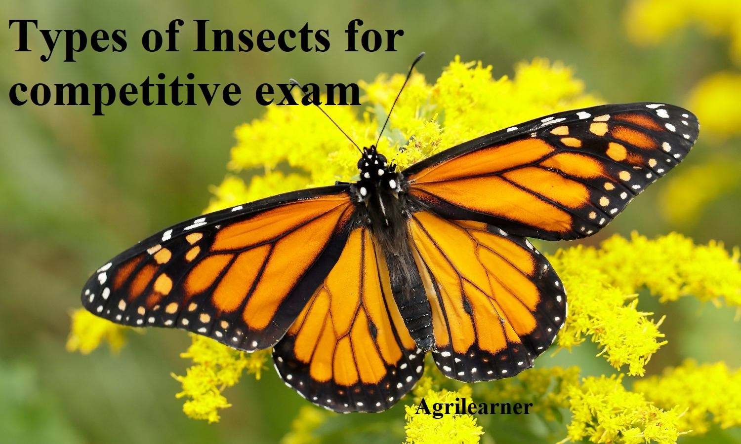 type of insects