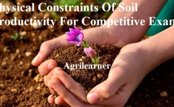 Soil Productivity