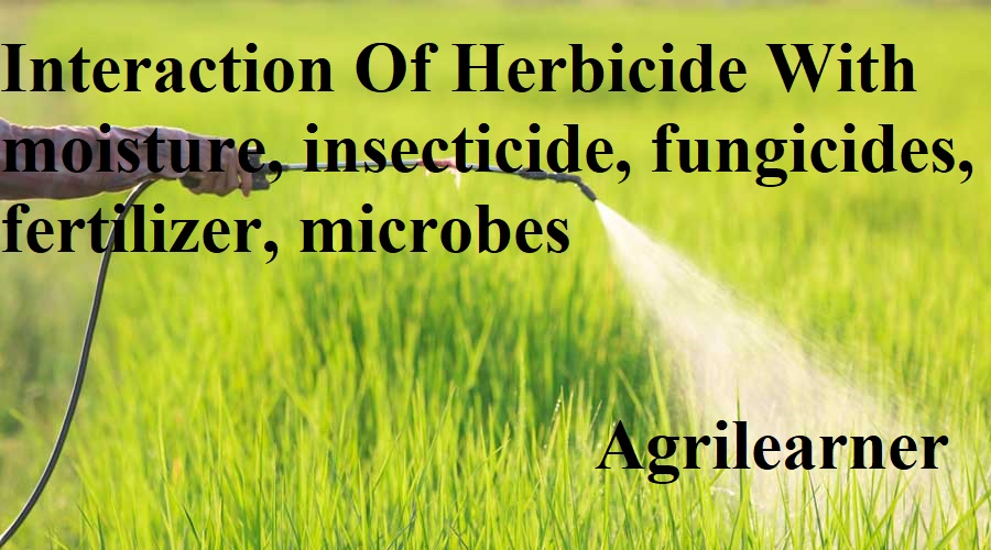 Interaction Of Herbicide