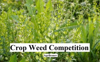 Crop Weed Competition